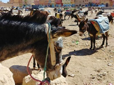 Rissani in Morocco. What to do, market, souks