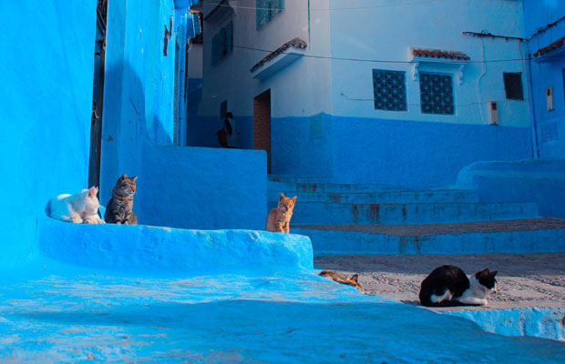 What to see in Chefchaouen? Cats in Chaouen are very photogenic